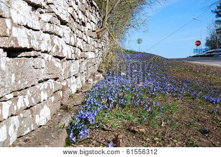 Blue Springtime Flowers
