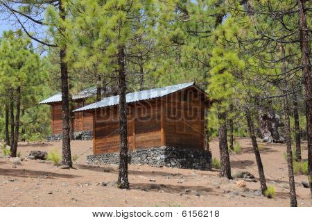 Log Cabins In The Forest