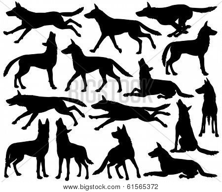 Set of illustrated silhouettes of wolves in different poses