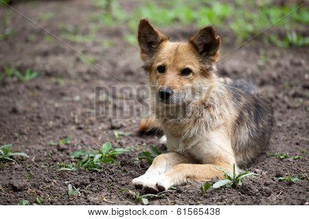A stray dog lies