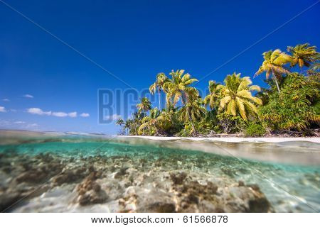 Beautiful tropical island above and under water