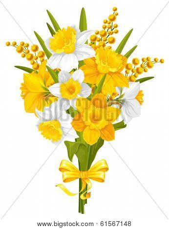 Daffodils. Bouquet of beautiful spring flowers, isolated on white background. Vector illustration.