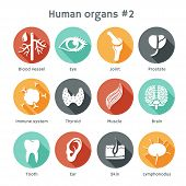 stock photo of internal organs  - Vector round icons of human organs Flat design - JPG