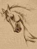 picture of freehand drawing  - freehand horse head sepia toned pencil drawing  - JPG