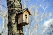 image of nesting box  - New nesting box on the tree - JPG