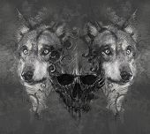 stock photo of north american gray wolf  - Wolf illustration - JPG