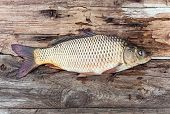 stock photo of shaky  - Carp fish over old wooden plank board - JPG