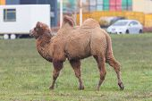 stock photo of hump  - Two - JPG
