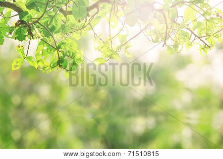 Green Nature Leave Abstract Background