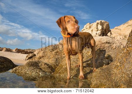 Dog Standing On Seaside Cliff