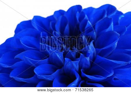 Beautiful blue flower close-up