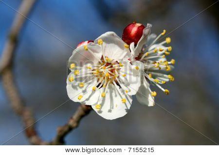 Flower Blossom