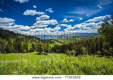 Beautiful Landscape Of Meadow And Forest In Mountains.