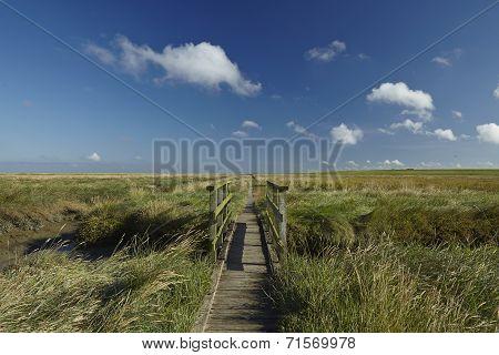 Westerhever (germany) - Salt Meadow With Footbridge