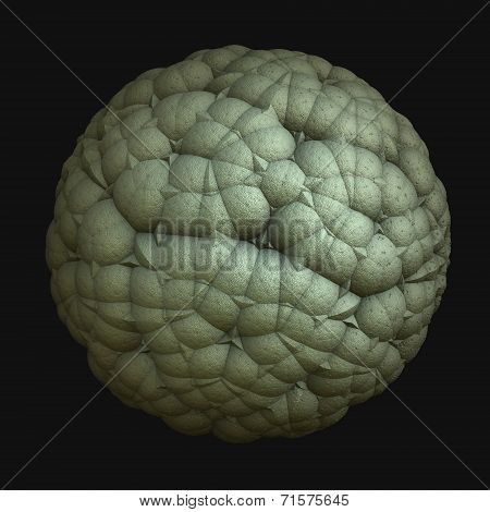 Sphere Cauliflower Black