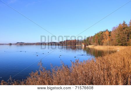 Autumnal Lakeside With Trees And Reed, Against Blue Sky, Bavaria Landscape