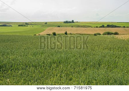 Fields To The Horizon