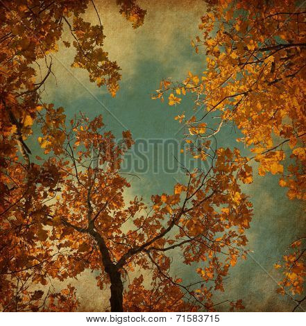 Fall  leaves on the sky background. Photo in retro style. Added paper texture. Oak