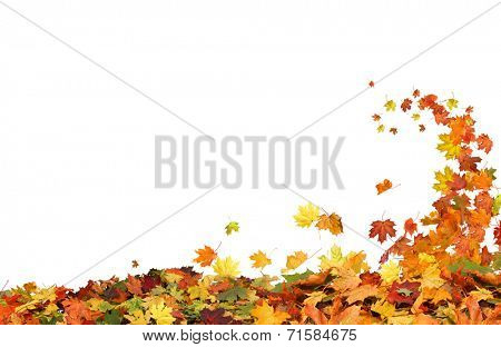 Autumn falling leaves on white background