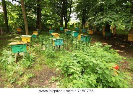 beegarden. a few beehives in a shadow of a threes.