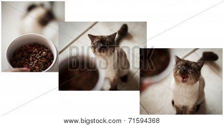 Cat wants eat
