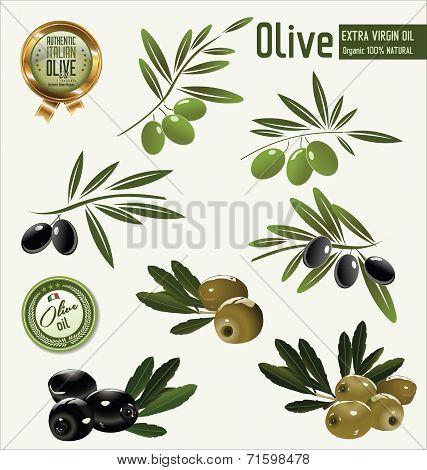 Olive background, green and black olives vector illustration