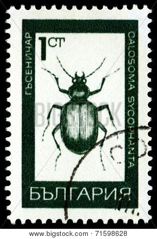 Vintage  Postage Stamp. Ground Beetle.