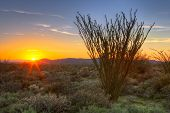 image of ocotillo  - Sonoran Desert in Arizona catching days last rays - JPG