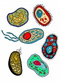 foto of protozoa  - Cartoon various amebas amoebas microbes germs or microbial lifeforms for science - JPG