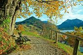stock photo of linden-tree  - lookout point with bench and lime tree lake schliersee in autumnal landscape - JPG