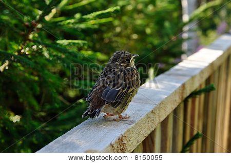 The baby bird is afraid has forgotten where a nest