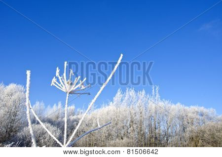 Beautiful Midwinter Rural Landscape With Heavy Hoarfrost Rime