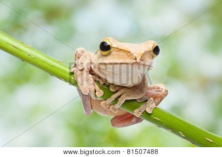 Close-up of a green Frog