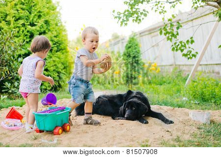 dog looks at children in a sandbox
