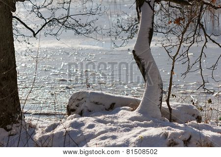 Tree with snow in front of lake