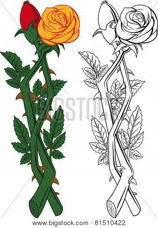 rose and dogrose