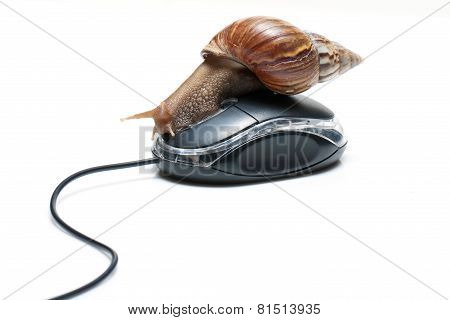 Snail on mouse.