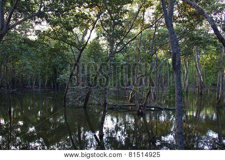 Mangroves In Singapore