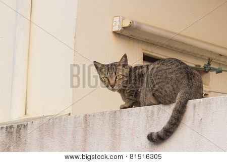 wild cat lie down on the wall