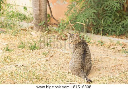 wild cat sitting on the ground