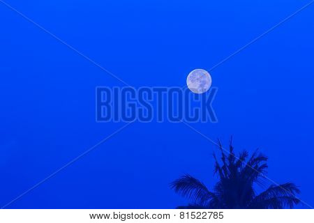 Moon over coconut tree