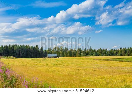 Yellow Field And Barn