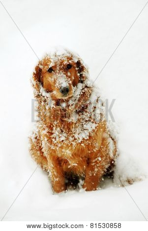 Dog At Snow