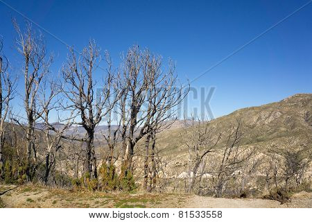 Dead Trees Over Valley