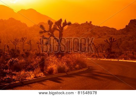 Joshua Tree California Scenery