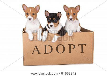three adorable puppies in a box