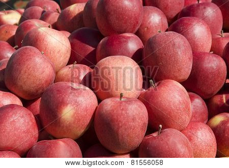 Beautiful, Red Apples.