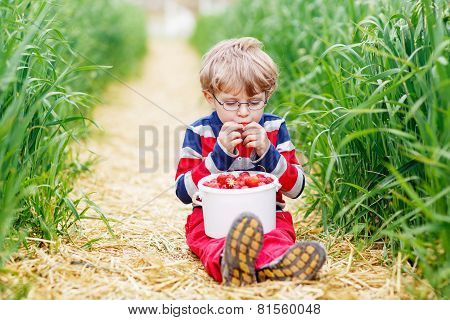 Cute Little Boy In Glasses Picking And Eating Strawberries On Berry Farm