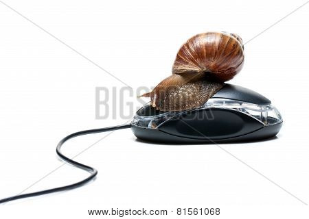 Snail on mouse