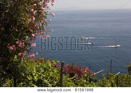 Amalfi Coast flowers